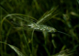 waves of grain 041