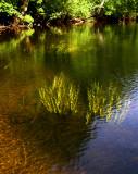 river grass 258