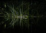 very natural light 047