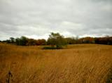 autumn gray 587