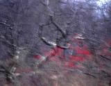 winter palette 176