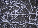 winter jungle 645