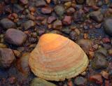 autumn shell