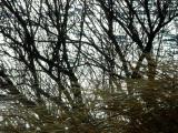 windwaterwood