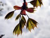 re-leaf