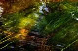 river grass 12