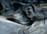 water morph 82
