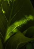 basic green 057