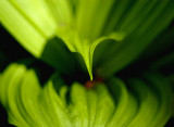 basic green 026