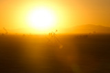 20100828_Burning_Man_2010_DHF_12890.jpg