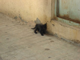 A kitten some where in Beirut's streets.