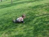 Schant chasing ducks