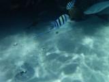 Some underwater sceneries