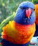 Australian Flora and Fauna