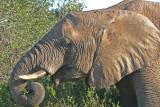 elephant Kariega .jpg