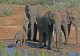 elephants 20.jpg