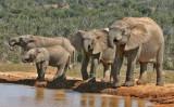 elephants 11.jpg
