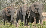 elephants 15.jpg