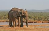 elephants 7.jpg