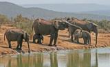 elephants 14.jpg