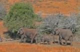 elephants 17.jpg