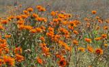 daisies skilpad 4.jpg