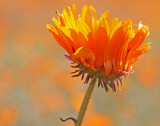 daisy skilpad 3.jpg
