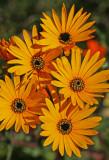 daisy skilpad.jpg
