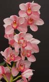 orchid 4.jpg