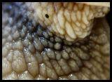 DSC09648 Snigel Detalj.jpg