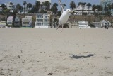 Seagull Takes Off