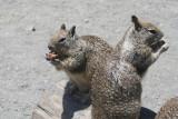 Squirrels Eating Granola Bars