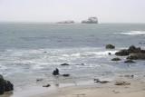 Playing Seals