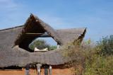 Ithumba Camp, Tsavo East, Kenya