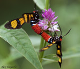 Mating Colors