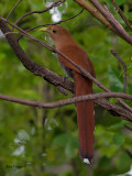 Squirrel Cuckoo 2010 - back view