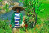 Sundan Ricer