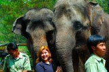 Taman Safari, Asian Elephants, Bogor 2006