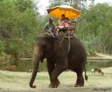 Elephant Trekking 2008