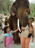 Elephant Petting 2008