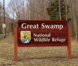 The Great Swamp National Refuge, New Jersey 2008