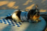 Spoiled Dog - Vientiane 2007
