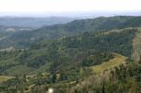 Birding Scenario - Mayacama Mountain Range, Sonoma CA 2008
