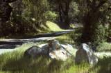 Birding Scenario - Pine Flat Road, Sonoma CA 2008