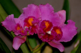 Orchid Sakaerat