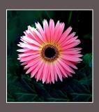 flower Belagio