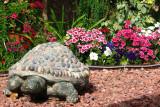 Our Garden Turtel