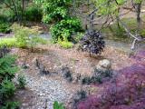 A. p. 'Tsuma Beni', Decumaria barbara vine, Lonicera nitida 'Baggesen's Gold', Fagus sylvatica 'Purpurea Pendula', A. p. 'Tamukeyama'