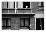 _ATK2451 zwart-wit pbase.jpg