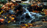 Fast Flowing In The Fall
